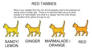 Colour And Pattern Charts Ginger Red Orange Tabby Cats