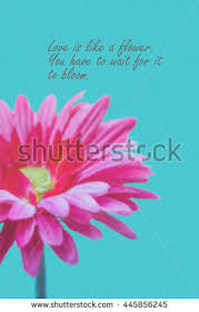 Flower Love Quotes Love Quotes On Pink Gerbera Flower Stock Photo Royalty Free 18