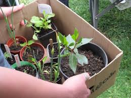 container gardening for beginners. Beginner-container-gardening Container Gardening For Beginners D