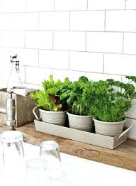 grow herbs in kitchen awesome indoor garden planting projects to start in the new year grow grow herbs in kitchen