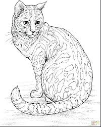 Cutest Kitten Coloring Pages Printable Cat Cute Of Cats And Kittens