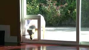 dog doors for sliding glass doors pet door for sliding glass door full size of door dog doors for sliding glass