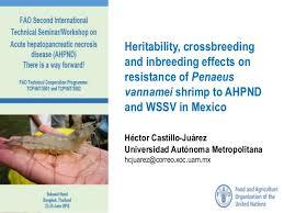 Presentation 2 3 Heritability Cross Breeding And Inbreeding