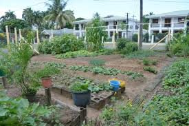 health ministry encourages backyard