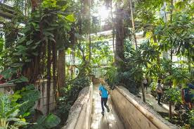 10 reasons to visit the united states botanic garden in washington dc