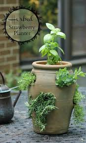 Create a culinary herb garden by using a strawberry pot which gives the  herbs great drainage