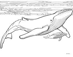 Small Picture Whales Coloring Pages Amazing Whale Coloring Page With Whales