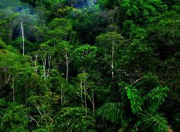 jungle wallpaper desktop. Unique Wallpaper Jungle Forest Hd Wallpaper Wallpapers Desktop  Desktopjungle Background Rain Tree Tropical Rainforests Intended Jungle Wallpaper Desktop W
