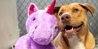 Stray <b>Dog</b> Tries to Steal <b>Unicorn</b> Toy from Dollar General Store ...