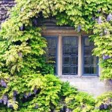Garden How To Grow Your Climbing Hydrangea As A Shrub Climbing Plant For Shade