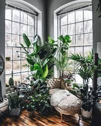 incredible indoor plants decor ideas