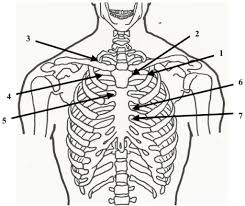 Anterior Chapman Points Suitable For Use In Treating Pa Open I