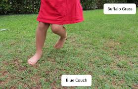 Grass Couch The Grass Is Greener Be A Fun Mum