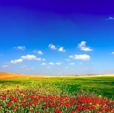 grass field background with flowers. Grass Sky Red Flowers Picture Field Background With U