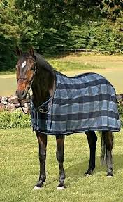 coolers anti sweats measuring a horse for blanket weatherbeeta size chart