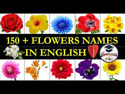 flowers names in english most