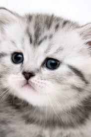 cute cat wallpaper iphone. Fine Iphone With Cute Cat Wallpaper Iphone N