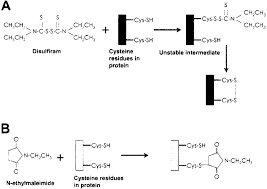 Disulfiram Reaction Fig 8 Comparison Of The Chemical Reaction Of Disulfiram And Nem
