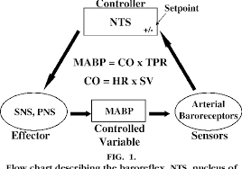 Cardiac Output Flow Chart Figure 1 From Laboratory Demonstration Of Baroreflex Control