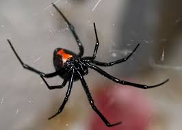 Free Spider Identification Chart 10 Of Africas Scariest Spider Species