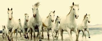 Pferde Hass Oder Pferde Liebe Auf Welcher Seite Stehst Du Watson