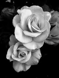 Roses Black And White Inspiration Růže Květiny Und Růžová