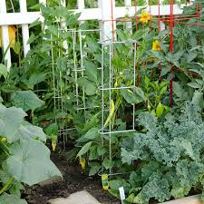 supports images plant supports trellises stakes more gardeners edge