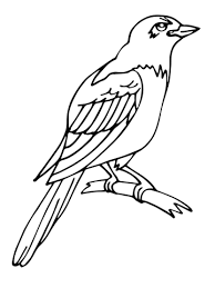 Small Picture Magpie coloring page Free Printable Coloring Pages
