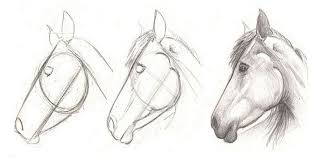 horse face drawing side.  Horse How To Draw A Horse Head In 3 Easy Step To Horse Face Drawing Side