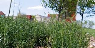 herb garden leeds