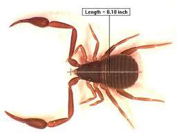 pscorpion jpg