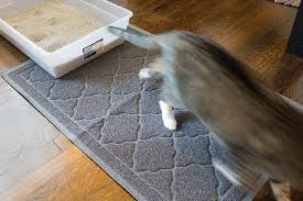a cat stepping out of a litterbox onto our top pick for best litter mat