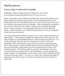 example of essay on tigers it is a fact that we do not have adequate sources as the regulating system does this company is not like your normal customized essay writing company