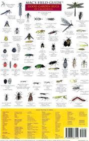 good garden bugs good garden bugs good bad garden bugs