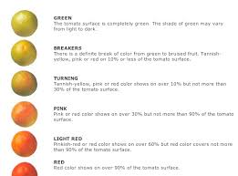Tomato Color Chart The Farmer Fred Rant Will Those Green Tomatoes Turn Red