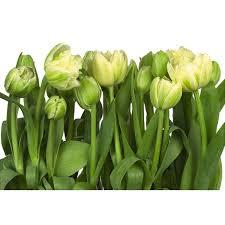 <b>Фотообои бумажные</b>, 368х254 см, <b>KOMAR</b> Тюльпаны в Москве ...