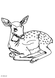 Coloriage Biche Oh Kids Fr