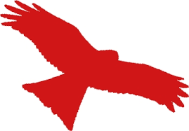 Image result for clip art hawk in red