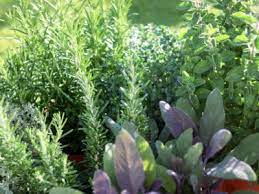 where to place an herb garden