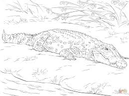Small Picture Realistic Australian Saltwater Crocodile coloring page Free