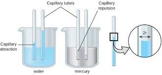 7 1 Surface Tension Viscosity And Capillary Action