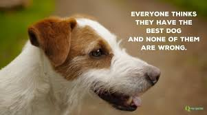 Quotes About Dogs Interesting 48 Dog Quotes For People Who Love Dogs