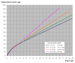 Chart Dog Graph File Dog And Human Year Graph Png Wikimedia Commons