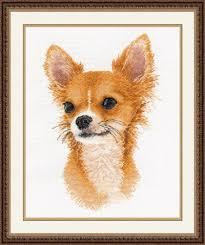 Chihuahua Color Chart Little Friend Chihuahua