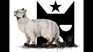 Unique Warrior Cat Designs Top 17 Most Unique Warrior Cat Designs My Opinion Part 1