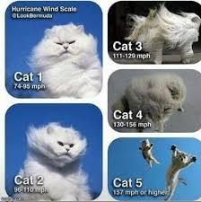 Animal Speed Chart Be Prepared And Stay Safe Know Your Categories Hurricane