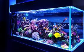 The Aquatic Design Centre Top Aquarium Shops In Dubai Think Fish Aqua Art More