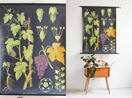 Botanical Prints Botanical Posters Antique Botanical Prints Botanical Wall Chart Wine Poster Educational Poster Educational Poster