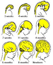 Neuroscience For Kids Brain Development