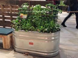 Kitchen Garden Trough 15 Tips For Trough Planters The Yarden